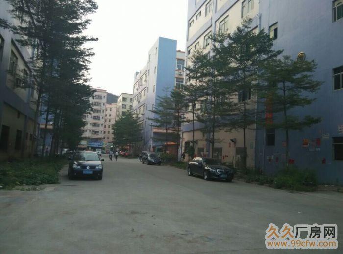 光明新区龙大高速长丰工业园1至2楼各2600平出租-图(5)
