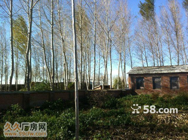 紧邻巴彦县城公路旁生态厂-图(3)