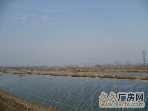 优质温室大棚转让约400亩-图(1)