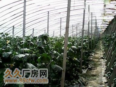 优质温室大棚转让约400亩-图(3)
