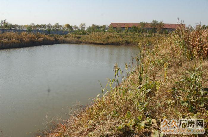地理位置好的大型厂房大院出租、出售(位于滨州沾化)-图(3)