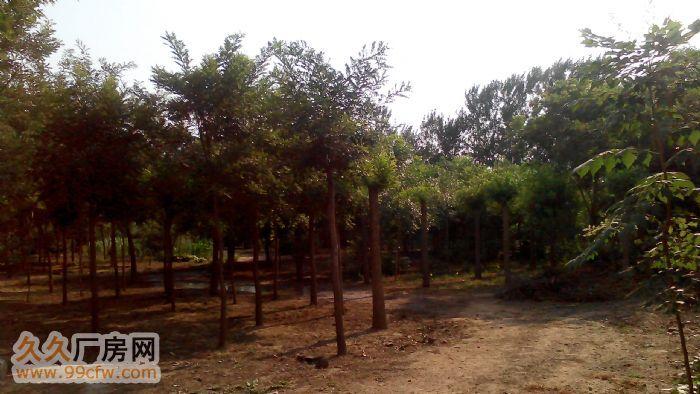易县20亩原厂区出租价格面议-图(4)
