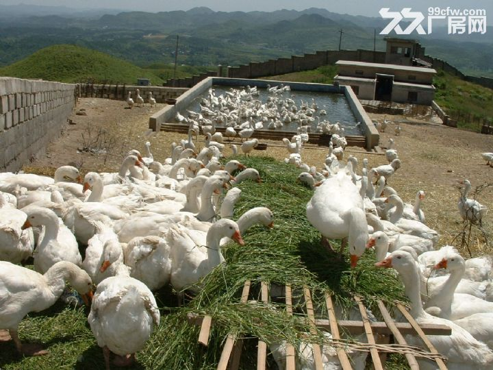 二手孵化机和养殖育雏圈笼出售-图(1)