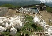二手孵化机和养殖育雏圈笼出售