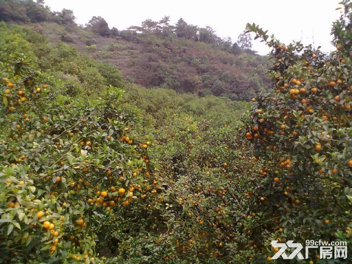 从化温泉中田约50亩山地果园农场整体永久转让-图(2)