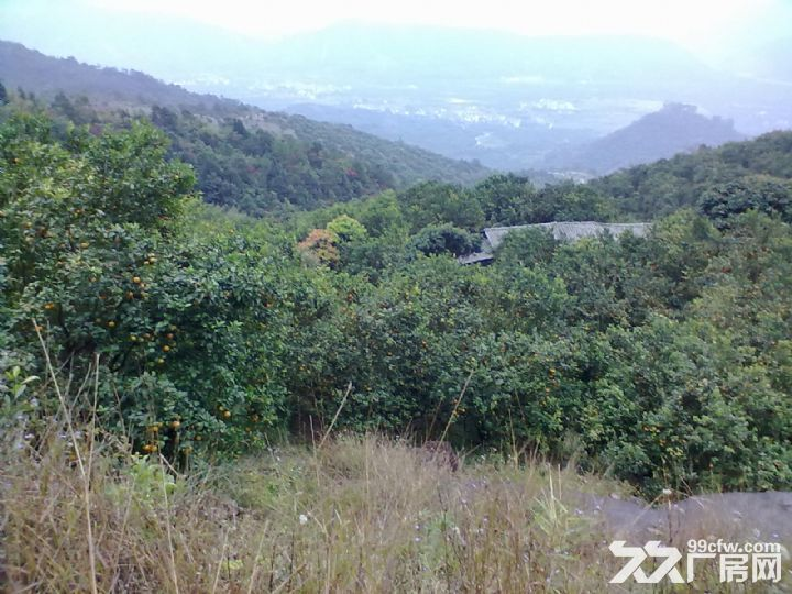 从化温泉中田约50亩山地果园农场整体永久转让-图(3)