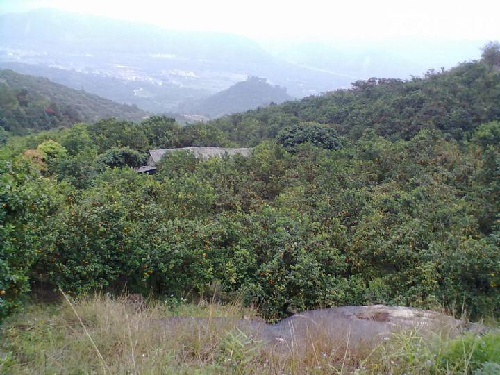 从化温泉中田约50亩山地果园农场整体永久转让-图(4)