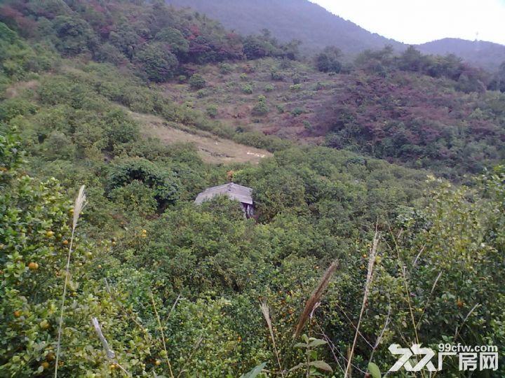从化温泉中田约50亩山地果园农场整体永久转让-图(6)