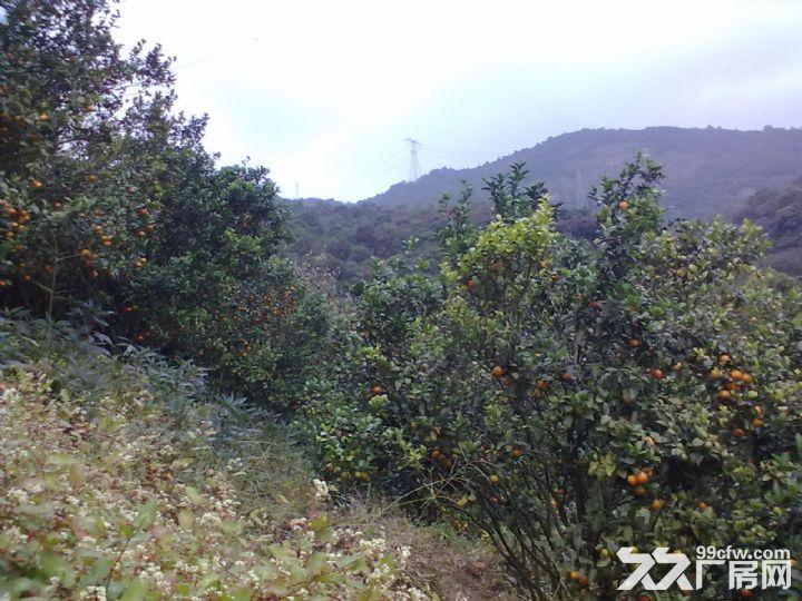 从化温泉中田约50亩山地果园农场整体永久转让-图(8)