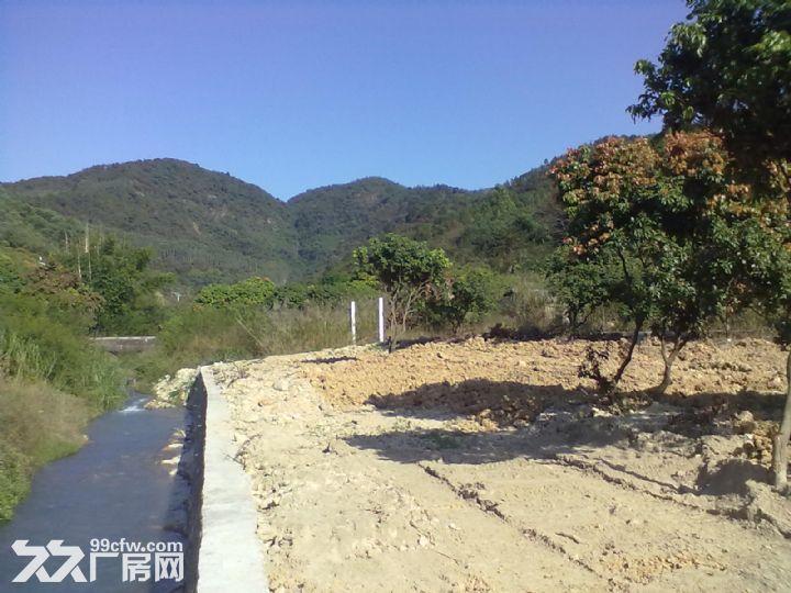 从化城郊城康溪水边4亩平地果园地永久转让-图(8)