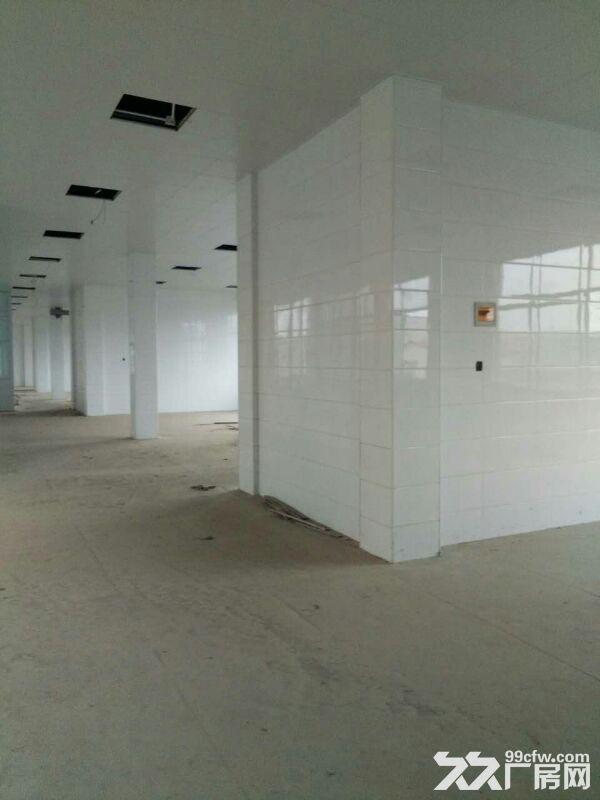 金寨现代产业园8000平全新厂房求出租或合作经营-图(4)