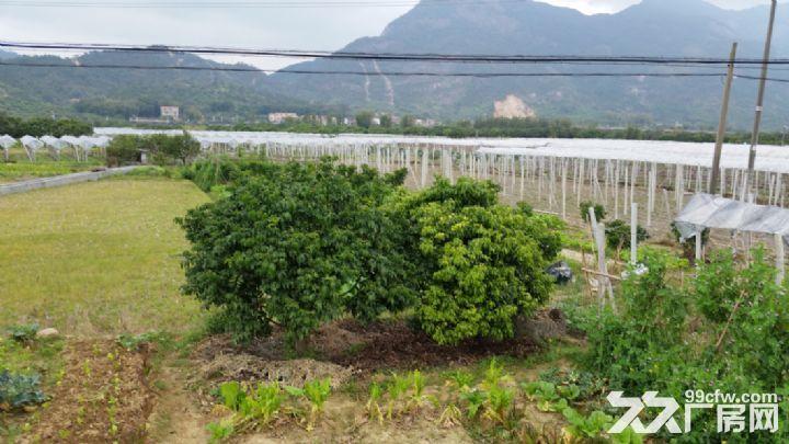 从化温泉桃园高速出口侧边1.5−3亩平地永久转让-图(3)
