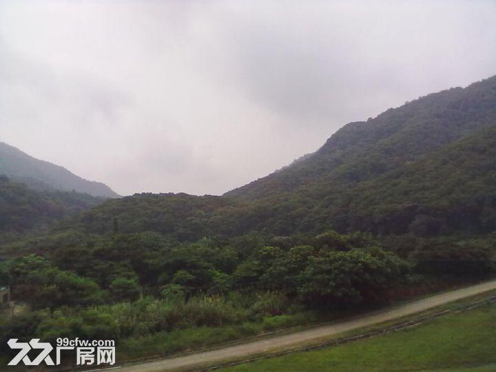 从化区城郊龙潭水库附近1653亩山地出租-图(4)