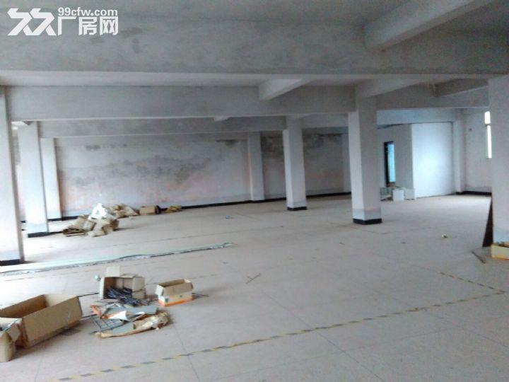 厂房仓库共1200平方出租-图(5)