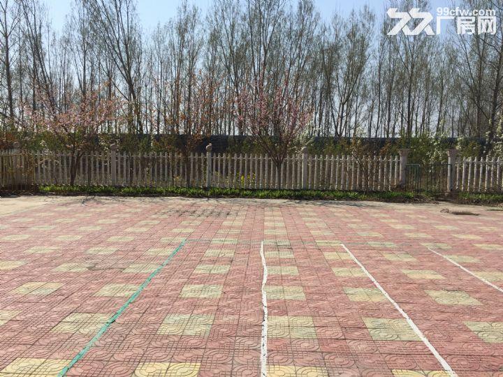场院独院出租3400平米租金便宜湛河区-图(6)