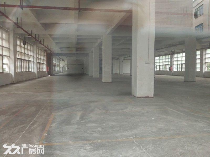 观澜清平高速口村委独院厂房招租1−5楼7000平米-图(4)