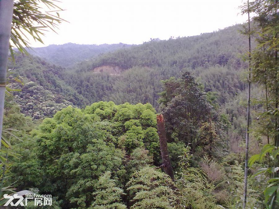 从化良口黄龙带水库联平村1100亩山地转让-图(2)