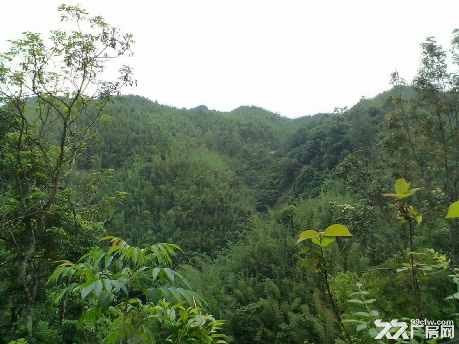 从化良口黄龙带水库联平村1100亩山地转让-图(5)
