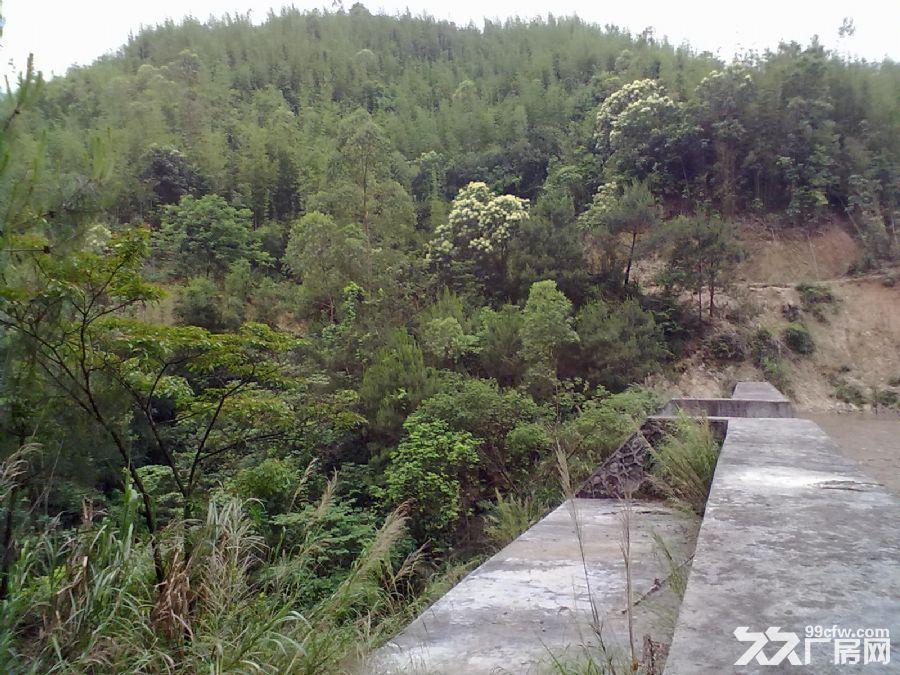 从化良口黄龙带水库联平村1100亩山地转让-图(8)