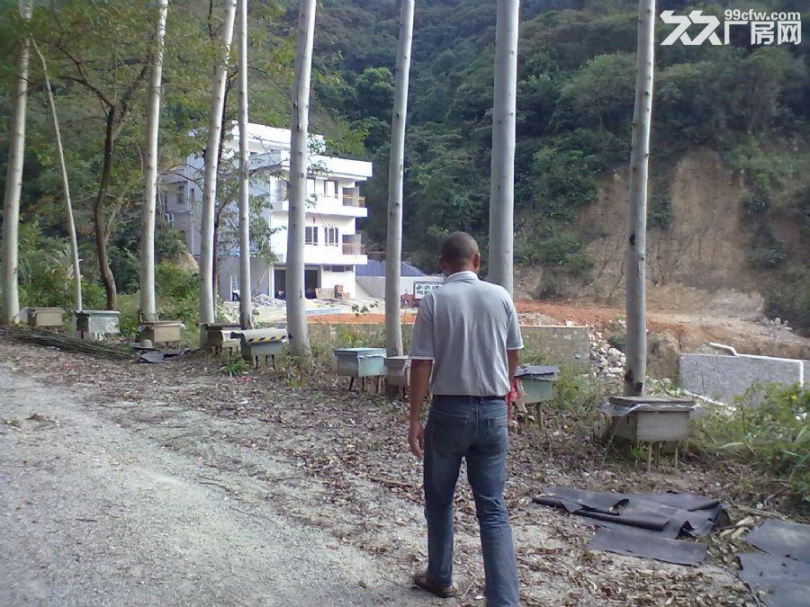 从化城郊城康电站附近9亩果园永久转让-图(1)