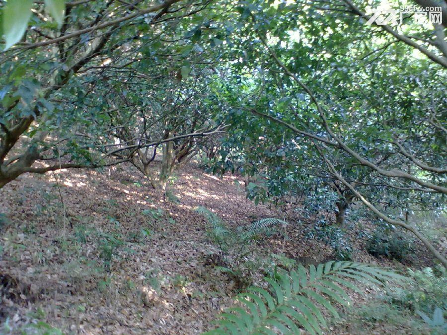 从化城郊城康电站附近9亩果园永久转让-图(2)