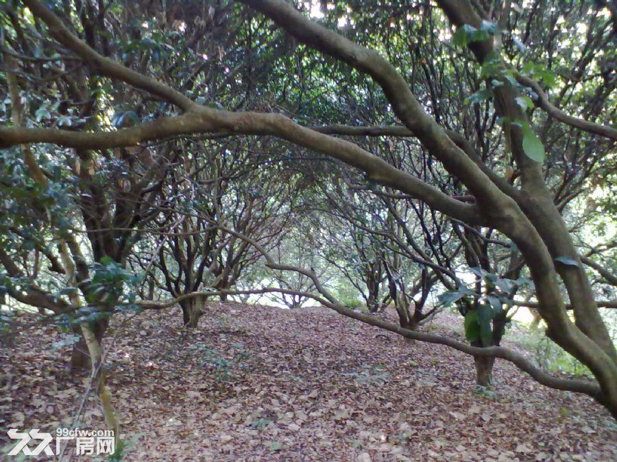 从化城郊城康电站附近9亩果园永久转让-图(7)