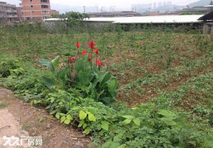 (出售)南屿茂田马路旁两亩地土地15万可盖厂房、别墅-图(1)