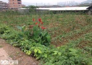 (出售)南屿茂田马路旁两亩地土地15万可盖厂房、别墅