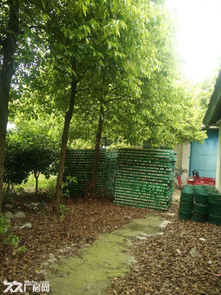 西洞庭12亩占地及厂房整体出售-图(5)