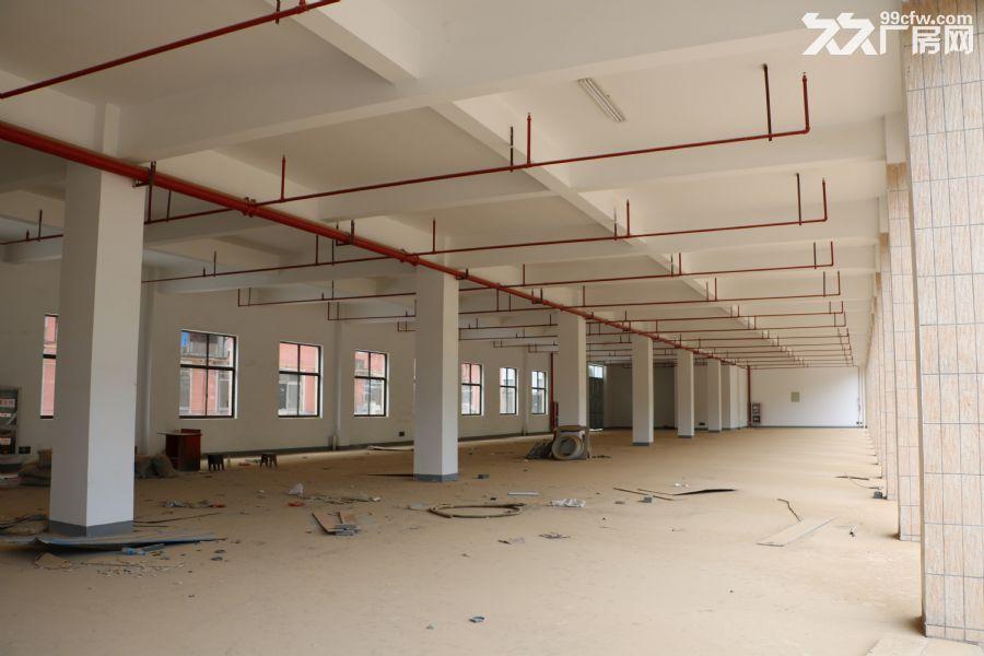 新建厂房出租,位置佳。-图(3)