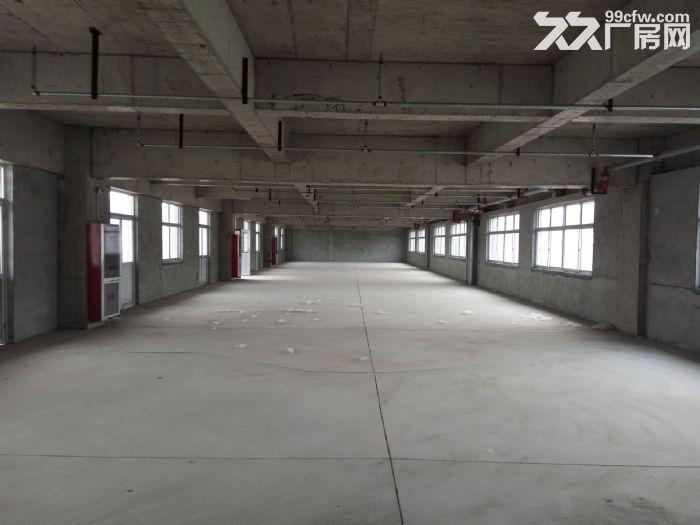 马厂湖镇全新大型厂房7800五层5.5元一平-图(6)
