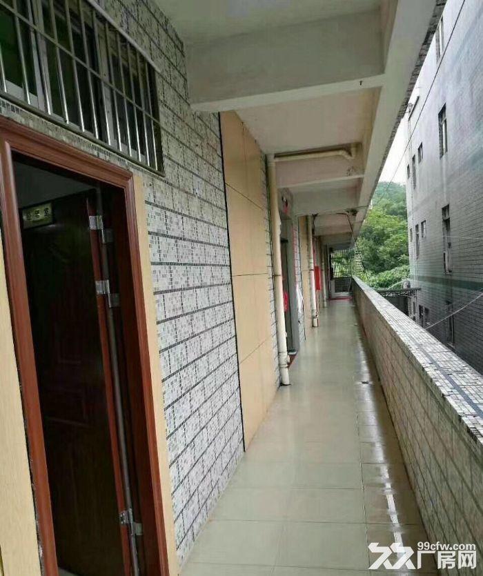 龙岗中心城南通道边新出独院厂房3300(可分租)-图(4)