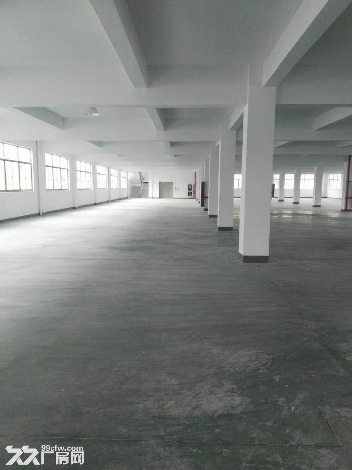 全新标准厂房出租,单层1800方,双边大货梯-图(5)