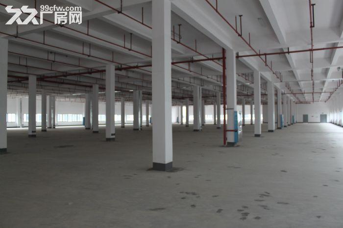 (出租)1600~5000大面积厂房招租(非中介)-图(5)