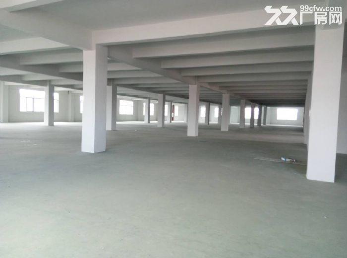新沙独栋10000平方标准厂房招租(整租或包租)-图(2)