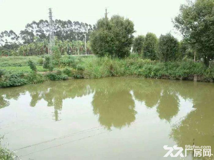 [价格美丽]出租6亩地皮\配备水电\环境舒适\交通便利-图(3)