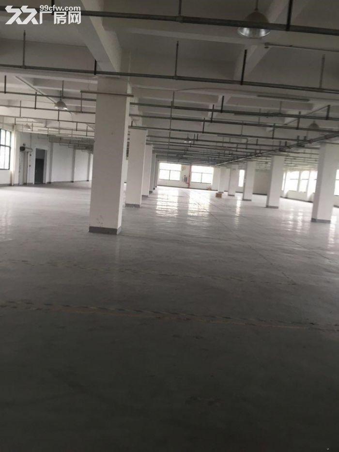 赵巷崧盈路12500平方独栋多层厂房仓库出租,大小可分割,有产证和货梯-图(3)