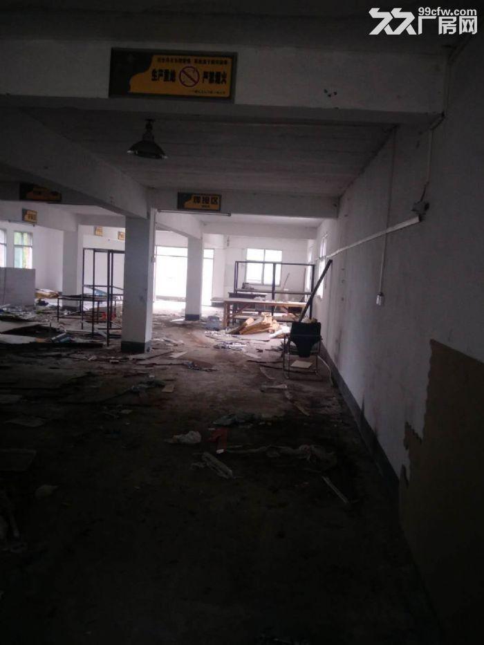南山1400平米标准仓库出租-图(8)