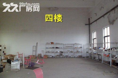 青浦练塘标准厂房仓库出租非中介-图(5)