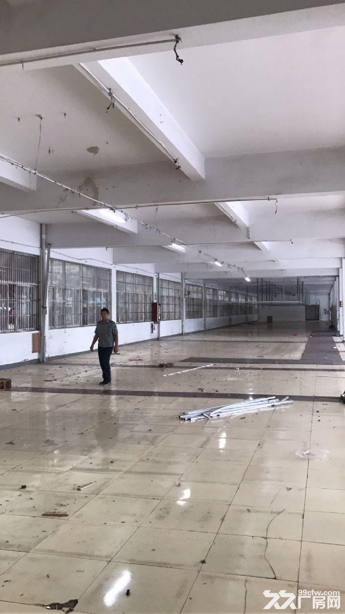 房东本人出租一楼2000平仓库,大车集装箱进出方便。-图(1)