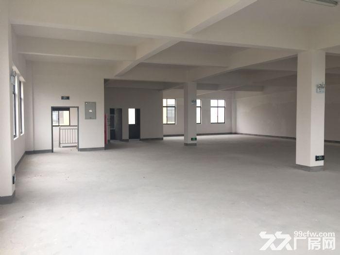 上海市金山区金山工业区全新厂房出租-图(4)