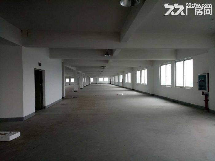 星华公路金沙江西路,稀有一楼厂房,独院大小可分割,适合做仓库,货物堆场,轻加工-图(6)