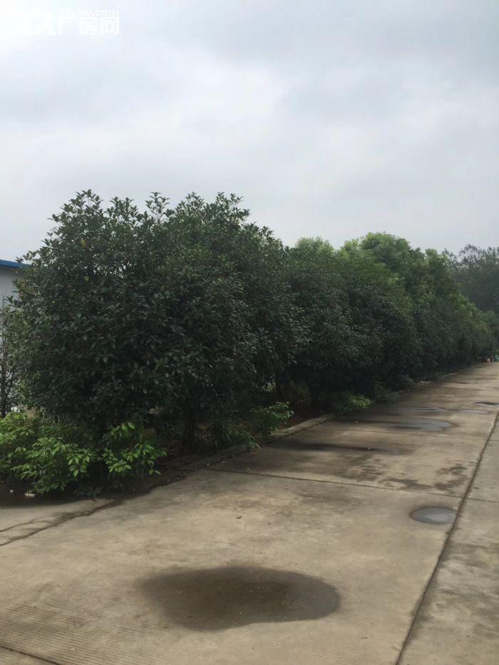 2800平米厂房,厂区内环境优美-图(2)