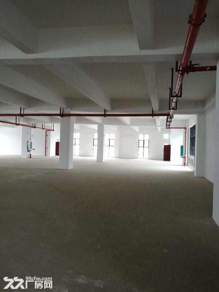 江南经开区金凯路标准食品厂房,独栋一万平带有一楼(仅3千出头)-图(4)