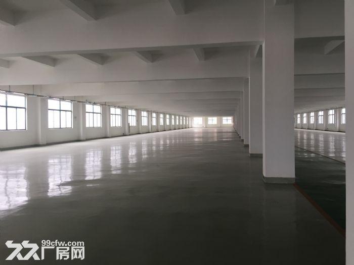 滨湖区胡埭镇夏渎路附近园区11000平方多层厂房出租-图(5)