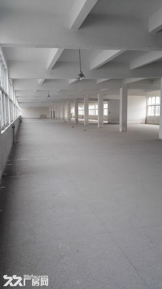 丹北镇厂房出租,交通便利,设施齐整-图(5)