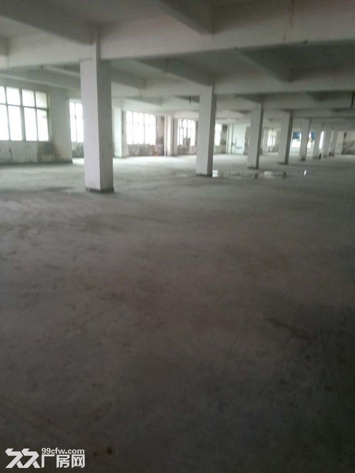 车墩独门独院厂房出租大小可分割104板块厂证齐全-图(3)