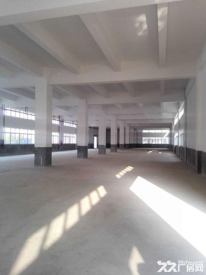 罗定天创双东环保工业园区80W平方园区现房出租-图(3)