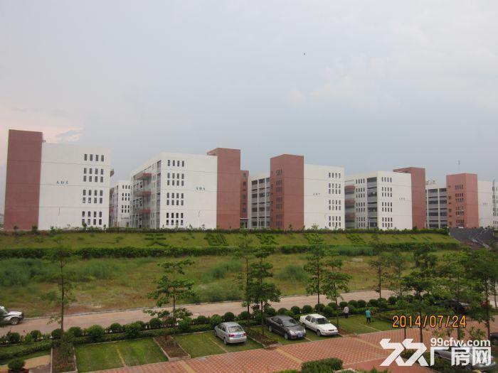 罗定天创双东环保工业园区80W平方园区现房出租-图(4)