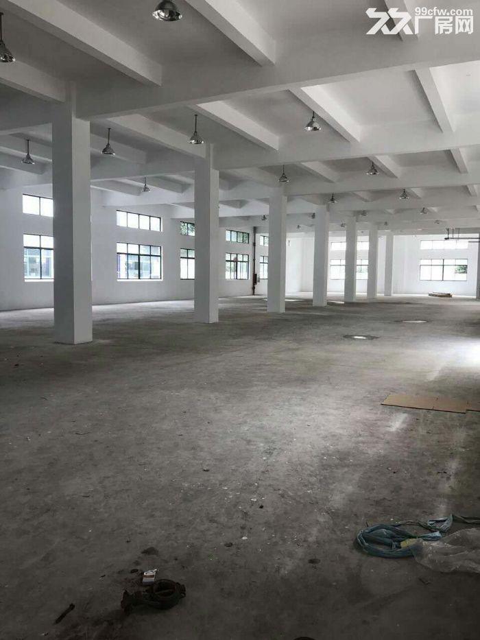 九亭单层仓库280,450,1300平米出租-图(5)